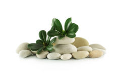 Stones and plant Stock Images