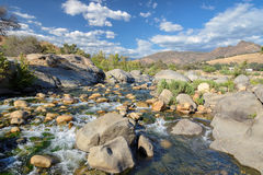Stones and plants in an environment of the rapid river Stock Image