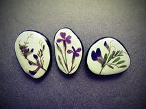 Stones with pressed flowers Stock Images