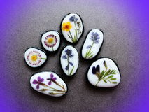 Stones with pressed flowers. Natural stones with pressed wild flowers on black leather Stock Images
