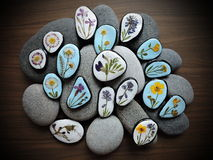 Stones with pressed flowers. Natural stones with pressed wild flowers on wooden desk Stock Photo