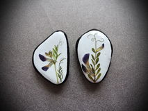 Stones with pressed flowers Royalty Free Stock Photography