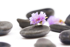 Stones with purple flower Royalty Free Stock Photography