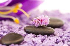 Stones with purple flower Stock Photos