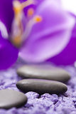 Stones with purple flower Stock Images