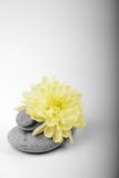 Stones in a pyramid. With flower royalty free stock photos