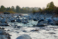 Stones on a river bed with trees Stock Images