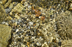 The stones on the river bottom. Bottom with clean, clear water. Small and large stones Royalty Free Stock Images