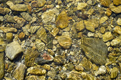 The stones on the river bottom. Variant2. The stones on the river bottom. Bottom with clean, clear water. Small and large stones Stock Photo