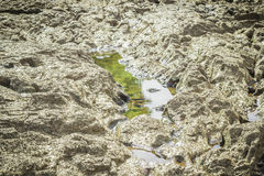 Stones in the river at Suratthani. Thailand Stock Photography