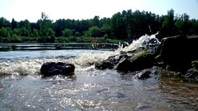 Stones and river water waves background. River water on forest background. Stones and river water waves background. Water river background. Close up river water stock footage