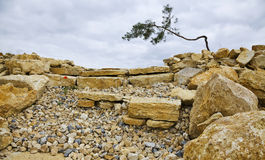 Stones and rocks. Large stones and rocks with a tree Stock Photos