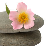 Stones with rose flower Stock Image
