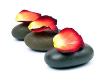 Stones with rose petal Stock Image