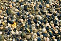 Stones through the sea Royalty Free Stock Images