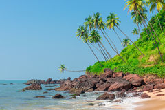 Stones in the sea and palm trees Stock Image