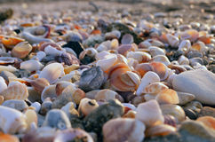 Stones and sea shells on the sea shore. Close-up texture for background seashells on the shore Royalty Free Stock Images
