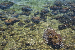 Stones in sea water Stock Photography