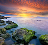 Stones in sea water on sunset background Stock Photography