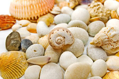 Stones and seashells. White stones and seashells background Royalty Free Stock Images
