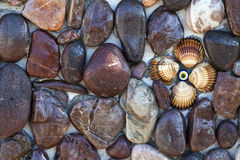Stones and Seashells on the Wall Royalty Free Stock Photography