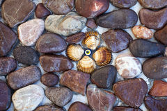 Stones and Seashells on the Wall Stock Photography