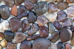Stones and Seashells on the Wall Stock Photo