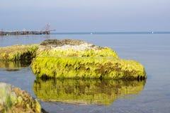 Stones seaweed alga sea ocean Royalty Free Stock Image