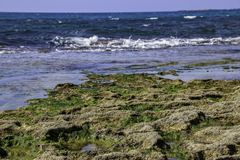 Stones and seaweed algae at low tide. Royalty Free Stock Images