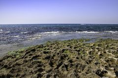 Stones and seaweed algae at low tide. Stock Images