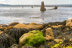 The Wreck of The Minx, Osmington Bay, Jurassic Coast, Dorset, UK. Stones and seaweed at Osmington Bay, with The Wreck of The Minx in the blurry background Royalty Free Stock Photos