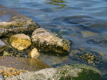 Stones with seaweed in the sea Royalty Free Stock Photo