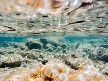 Stones and seaweed underwater Beauty world Stock Photo