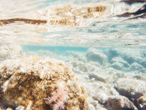 Stones and seaweed underwater Beauty world Royalty Free Stock Photography