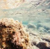 Stones and seaweed underwater Beauty world Stock Photos