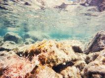 Stones and seaweed underwater Beauty world Stock Image