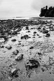 Stones at Second Beach Royalty Free Stock Photos