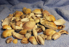 Stones and shells Royalty Free Stock Image