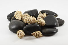 Stones and shells. Blacks rocks and sea shells decorative Royalty Free Stock Image