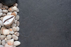 Stones and shells on a dark background Stock Images