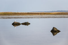 Stones on shore of the Baltic Sea Stock Photo