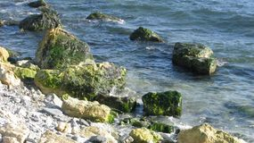 Stones on the shore. Rocky beach, seaweed.Summer day by the sea Stock Images