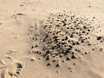 Stones. Small stones on the sand left after the flood Stock Image