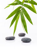 The Stones spa treatment scene and bamboo leaves with raindrop z Stock Images