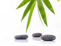 The Stones spa treatment scene and bamboo leaves with raindrop z Stock Image