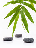 The Stones spa treatment scene and bamboo leaves with raindrop z Royalty Free Stock Photography