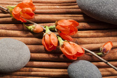 Stones with a sprig of flowers. Royalty Free Stock Photography