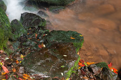 Stones stream. Wet stones, stream flowing by them Royalty Free Stock Photography