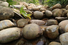 Stones and streams Stock Images