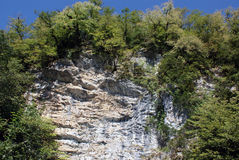 And on stones trees grow, Abkhazia - Mountain Stock Photography